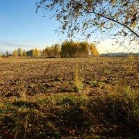 Дни октября :: sergej-smv