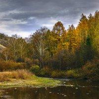 осень в лесу :: Екатерина Агаркова