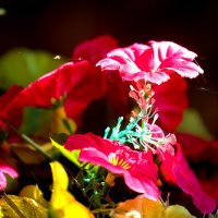 Осенняя паутина цветов :: Николай Николенко