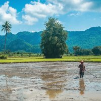Рисовые поля, Таиланд :: Oleg Khudoleev