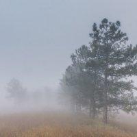 Добро пожаловать в туман! :: Алина Шостик