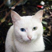 Уличный кот :: Emily Fox