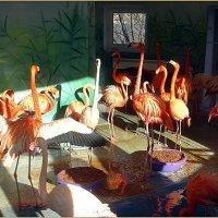 Фламинго :: Вера