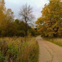 Осенняя дорога :: Анатолий Антонов