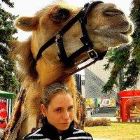 Двойной  портрет  Девочка и  верблюд :: олег свирский