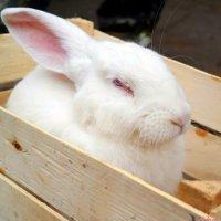 Кролики - это не только пушистый мех... :: Андрей Заломленков