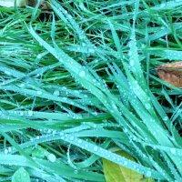 Голубая трава :: Tanja Gerster