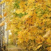 Осень в горошек... :: Svetlana Sneg