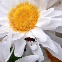 На искусственном цветке :: Нина Корешкова