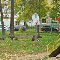 Лоси живут рядом с нами :: Лидия (naum.lidiya)