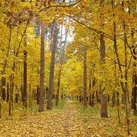 Тропинка в осень :: Лидия (naum.lidiya)