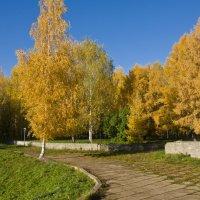 Золото осени. :: Андрей Синицын