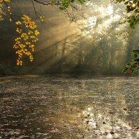 Солнечные лучи :: Eduard Mezker