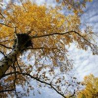 Осенний лес :: Eugene A. Chigrinski