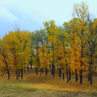 А, может, осень для того и создана в оранжевых тонах, чтобы нам было светло, тепло и вообще... :: Валентина ツ ღ✿ღ