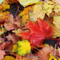 Осенняя пора :: Алина Муравлева