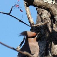 птички :: Valeriy Somonov