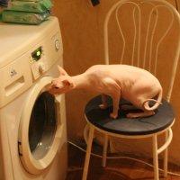 кот и стиральная машина :: maikl falkon