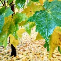 Голубые листья :: Tanja Gerster