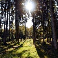 В осеннем лесу ... :: Владимир Икомацких