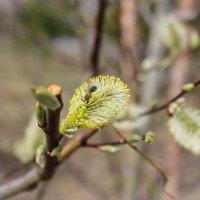 Частичка весны :: Gaivor ina