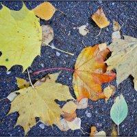 Осенние листики :: Galina Belugina