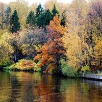 Осенние краски :: Татьяна Богачева