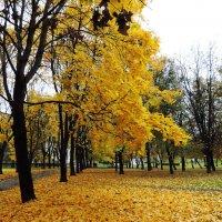 Осенние аллеи :: Елена Якушина