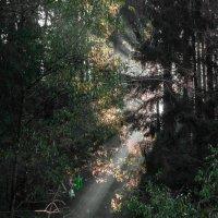 Утро в лесу. :: Вячеслав Ложкин