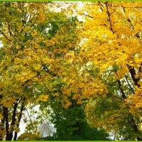 Осень в парке. :: Любовь К.