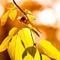 осень :: надежда Коновалова