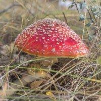 лесной обитатель :: Геннадий Свистов