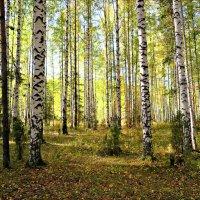 В осеннем лесу :: Leonid Rutov