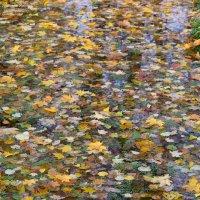 На ковре из желтых листьев :: Александр Руцкой