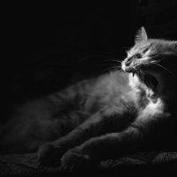 Страшнее кошки зверя нет_) :: Александр Ещенко