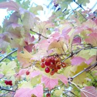 Осенние плоды :: Serg