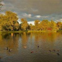 На Золотом пруду... :: Sergey Gordoff