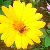 Цветы :: Рашид