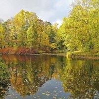 Разноцветная осень. :: Senior Веселков Петр