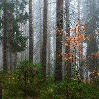 Туман в лесу. :: Наталья