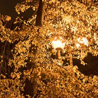 Очень золотая осень 2017 (15) :: Николай Варсеев