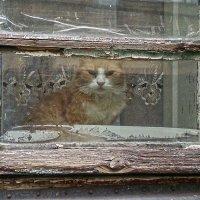 Старый  кот в старом окне :: Natali D