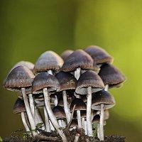 ))в лесу :: İsmail Arda arda