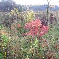Полследняя краски осени :: Надежда