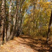 Осенний пейзаж с берёзами :: Александр Синдерёв
