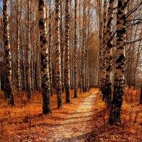 Осень в березовой роще :: Татьяна Шаклеина