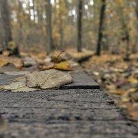 лес и :: Геннадий Свистов