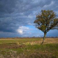 Осень :: Олег Гроник