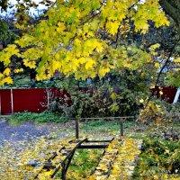 Падают листья.... :: Михаил Столяров