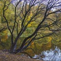 Осень ... :: Viacheslav Birukov